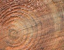 Concentrische ringen op een logboek Stock Afbeeldingen