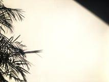 Concept à distance tranquille extérieur de nature tranquille de lueur de ciel image stock