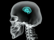 Concept of an Active Human Brain on a Dark Vector Royalty Free Stock Image