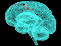 Concept of an Active Human Brain on a Dark Vector Royalty Free Stock Photography