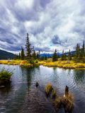 Concept of active and photo-tourism. The lakes, firs and forest of Canada. The cloudy sky is reflected in the smooth water royalty free stock photography