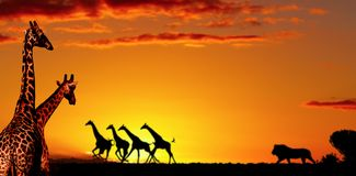Concept africain de nature photo stock