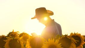 Concept of agricultural business. agronomist man sees the blooming field of sunflower. Businessman with tablet checks. Concept of agricultural business stock video