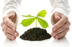 Concept of alternative healing. Male hands around new plant growing from pile of soil. Concept of alternative healing Royalty Free Stock Photo