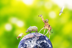 Concept of animal coexistence on earth. Elements of this image furnished by NASA. Royalty Free Stock Photography