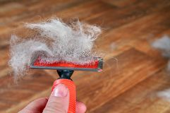 Concept annual molt, coat shedding, moulting pets. Hand hold red rakers brush with wool pet. Close up. Copy space. royalty free stock images