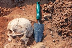 The concept of archaeological excavations. Human remains skull is half in the ground with shovel near. Real digger process. Outdoors, copy space stock image