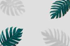 Concept art Minimal background design Leaves monster blue Tropical and leaves in vibrant bold gradient trendy Summer Tropical Leav royalty free stock image