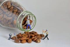 Concept, assortissant des grains de café Images libres de droits