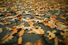 Concept autumn is coming to town Royalty Free Stock Photo