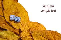 Concept of autumn weather - mix of fog and rain, sample text Royalty Free Stock Images