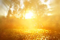 Free Concept Background Photo Of Light Burst Among Trees And Glitter Golden Bokeh Sparkles Royalty Free Stock Photography - 160641317