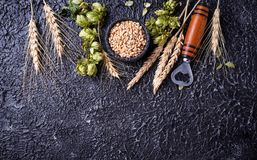 Concept of the beer ingredient. Concept of beer ingredient. Hops, malt and ears of barley Stock Images