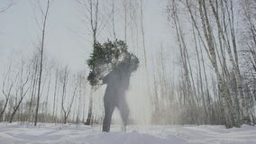 Man raises and carries felled lush tree to his home. Christmas Eve and New year. Guy walks in the forest in the snow stock video footage