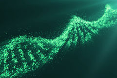 Concept of biochemistry with dna molecule on green background, Genetic engineering scientific concept, green tint. 3D. Concept of biochemistry with dna molecule Royalty Free Stock Image