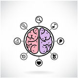 Concept of brain function for education and scienc Stock Photography