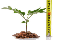 Concept for business growth Royalty Free Stock Photos