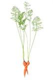 Concept carrot Stock Photos