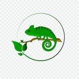 Concept with chameleon logo. On checked background Stock Image
