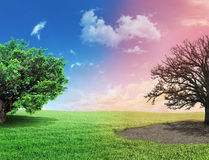 Concept of changes. One side full of grass with a life tree, different side is desert with a dead tree. Concept of life Royalty Free Stock Images