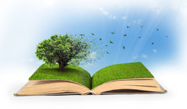 Concept of changes. Open book full of grass with a tree that turns into a birds Stock Images