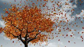 Concept Of Changing Of The Seasons From Spring To Autumn. Leaves Appear On The Tree, They Turn Yellow And Then Fall Off.