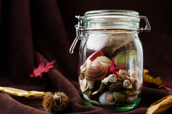 Concept of changing seasons summer in jar in autumn setting. Concept of changing seasons still life summer in jar or jared summer in autumn setting with red and Royalty Free Stock Image