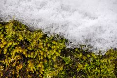 Concept of changing seasons and weather. Autumn or spring fighting with winter royalty free stock images