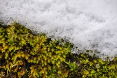 Concept of changing seasons and weather. Autumn or spring fighting with winter stock photo