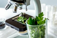 Concept - check dietary supplements in laboratory on microscope. No one royalty free stock images