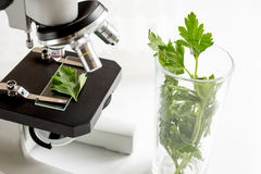 Concept - check dietary supplements in laboratory on microscope Royalty Free Stock Images