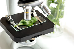 Concept - check dietary supplements in laboratory on microscope Stock Photo