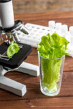 Concept - check dietary supplements in laboratory on microscope Stock Photos