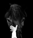 Concept: child hand is touching horse head Royalty Free Stock Photography