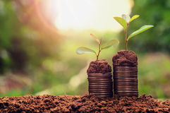 Concept coins in soil with young plant. For saving money Royalty Free Stock Photography