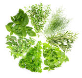 Concept : collection of herb is a plant used for flavoring or me Stock Photo