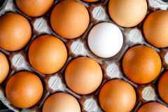 Concept of correct choice eggs on wooden background top view Royalty Free Stock Images