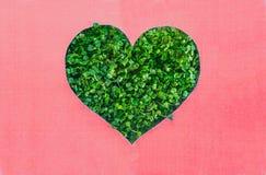 Concept créatif avec le fond rose avec le contour de forme de coeur en pousses fraîches vertes Jour de terre, concept de nature d images stock