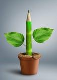 Concept créatif d'enseignement primaire, crayon avec des feuilles comme tige Images libres de droits