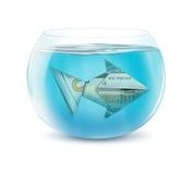 Concept créatif de finances, poisson du dollar dans l'aquarium d'isolement sur le wh Image stock
