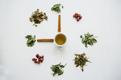 A concept or creative idea that means tea time. Useful herbal or green tea in the center and around the various dried. Herbs for its preparation royalty free stock photography
