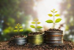 Concept croissant d'argent, concept de réussite commerciale, élevage d'arbre Photos stock
