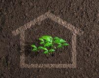 Concept croissant de maison vivante écologique photos libres de droits