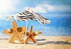 Concept d'été avec les étoiles de mer drôles Photographie stock libre de droits
