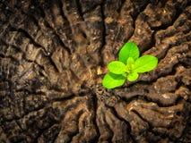 Concept d'affaires de succès comme jeune plante s'élevant dans le tronc central images libres de droits