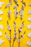 Concept d'allergie, serviettes utilis?es blanches et fleurs photographie stock