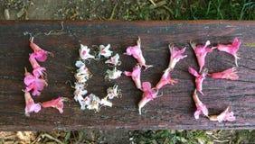 Concept d'amour avec des fleurs de châtaigne Photographie stock