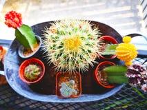 Concept d'amour Beaucoup d'espèces de cactus sont plantées dans des pots Et ensemble i Photographie stock