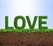 Concept d'amour de croissance d'herbe Image libre de droits