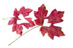 Concept d'amour de feuilles d'automne Photo stock